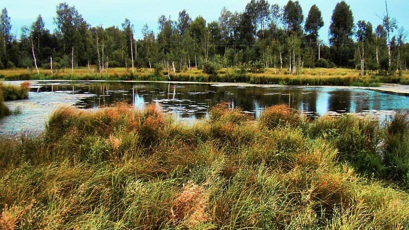 ВПодмосковье открыли шесть новых неповторимых природных заповедников